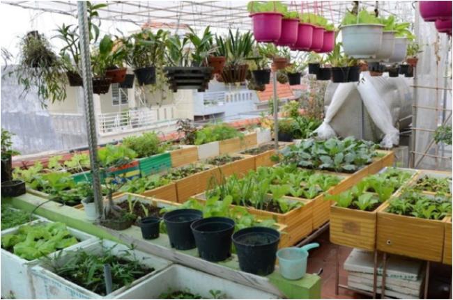 Mô hình trồng rau bằng thùng xốp vừa thu lời vừa bảo vệ môi trường