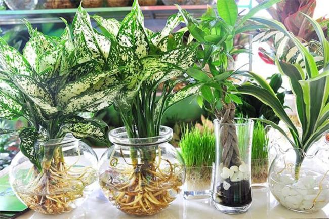 Cách làm giàu ở nông thôn bằng nghề trồng cây cảnh, cây phong thủy