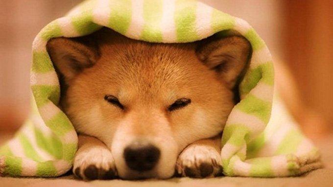 Nằm mơ thấy chó mang ý nghĩa gì?