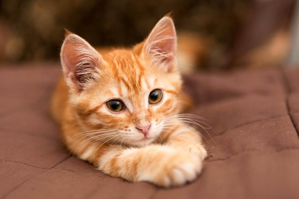 Mèo mang nhiều ý nghĩa linh thiêng