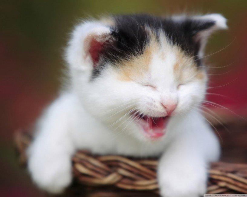 Nằm mơ thấy mèo con