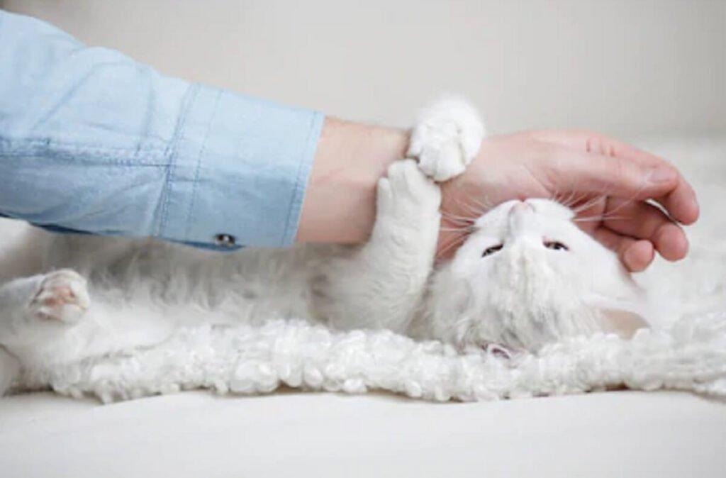 Mơ thấy mèo cắn tay là điểm gì?