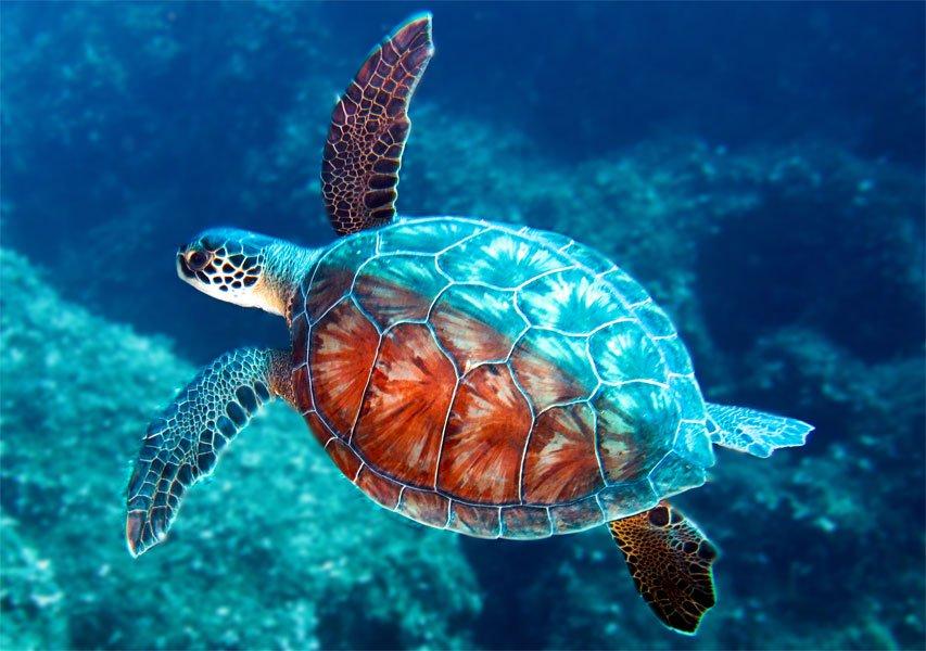 Mơ thấy rùa bơi trong nước cho thấy điều gì?