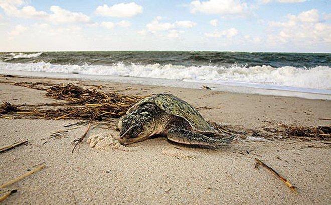Ngủ mơ thấy rùa chết nói lên điều gì?