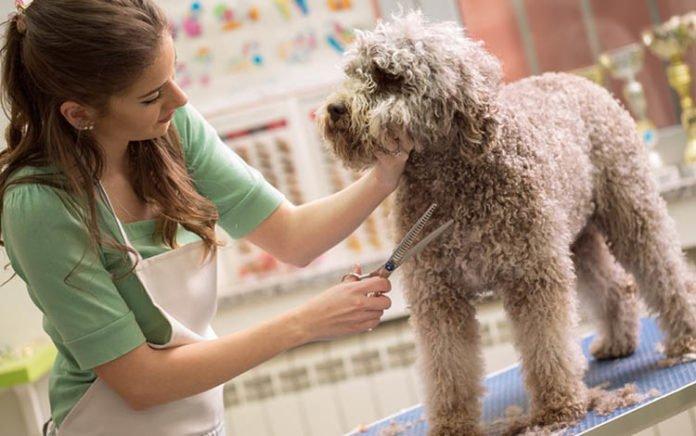 Spa cho thú cưng là một trong số mang lại lợi nhuận khủng