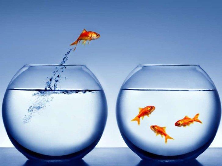 Một trong những bí quyết để thành công đó là dám mạo hiểm