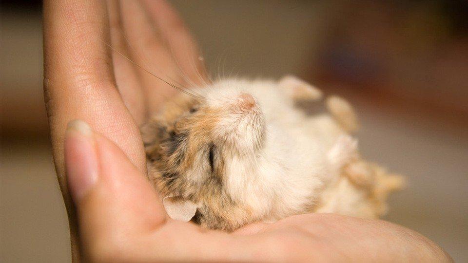 Mơ thấy chuột chết dự báo may mắn sắp đến với bạn đặc biệt là về công việc