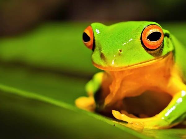 Nằm mơ thấy ếch đánh gì, con ếch số mấy?