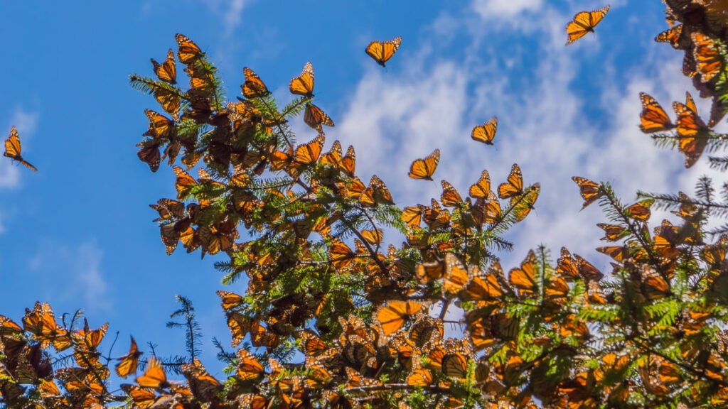Giải mã giấc mơ về bướm
