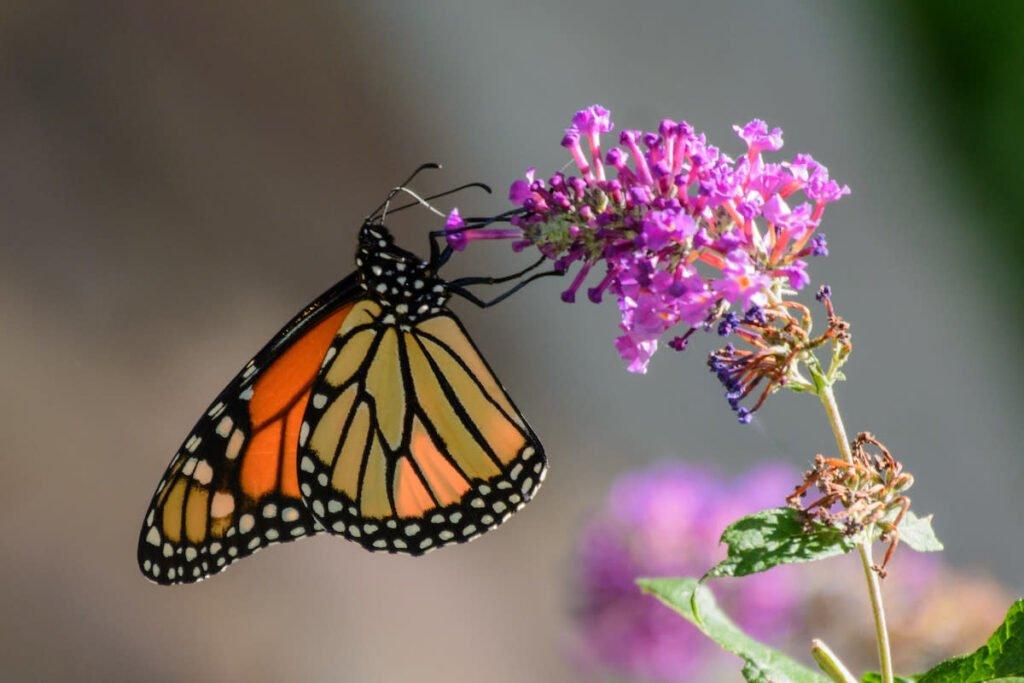 Chiêm bao thấy bướm nhiều màu sắc