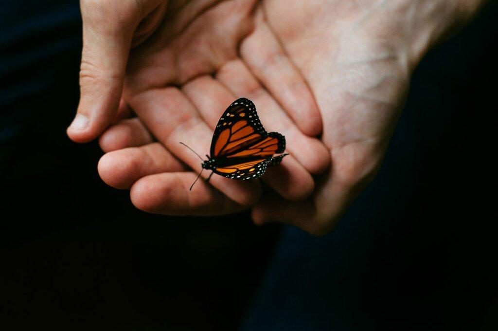 Nằm mơ thấy chuyện bắt bướm
