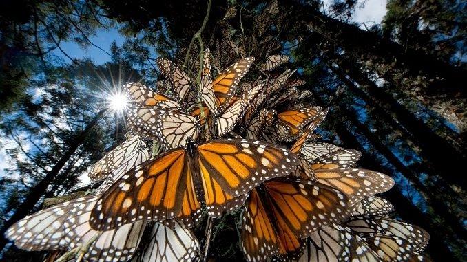 Mơ thấy bướm đánh số gì?