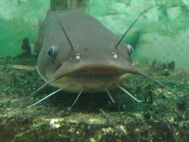 Nằm mơ thấy cá trê đen báo điềm lành hay dữ?