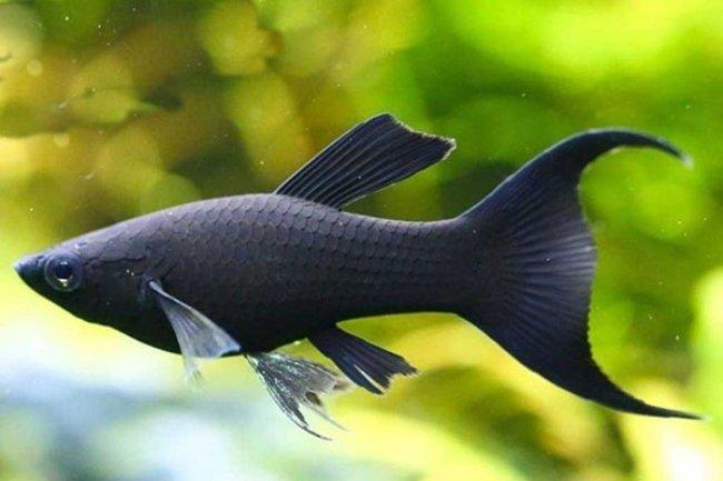 Mơ thấy cá đen đánh số gì cho may mắn?