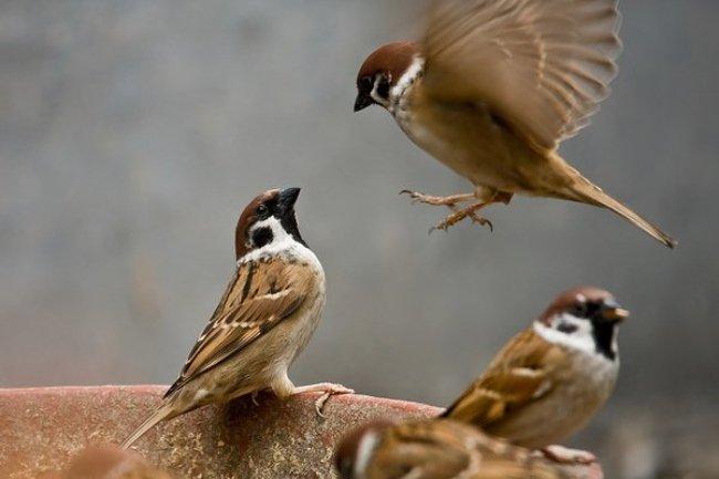 Mơ thấy chim ẩn chứa nhiều điềm báo sâu xa
