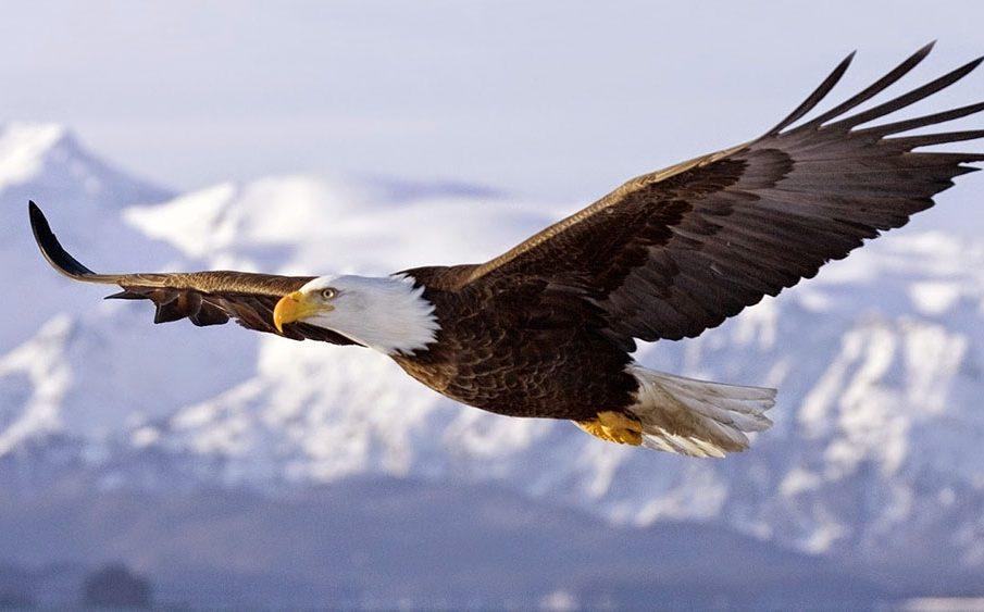 Mơ thấy chim đại bàng cho thấy bạn đang có những hoài bão to lớn