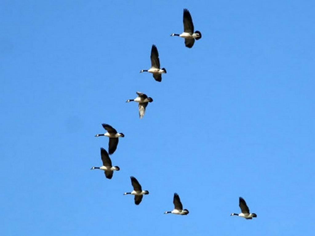 Mơ thấy chim én đang bay lượn