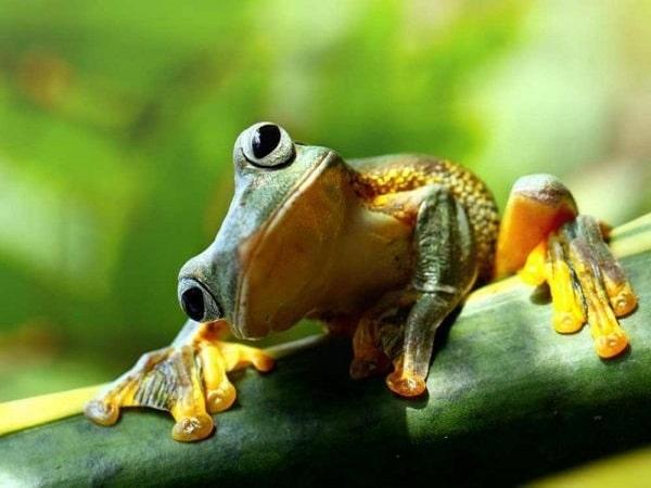 Nằm mơ thấy con ếch đánh số gì Con ếch số mấy