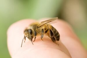Nằm mơ thấy con ong