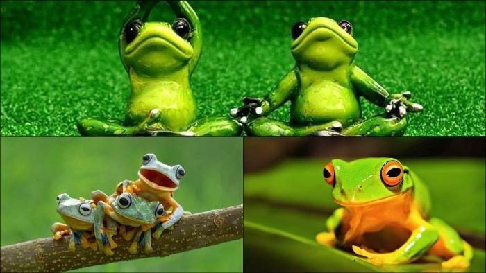 Nằm mơ thấy bắt được nhiều ếch thì sẽ như thế nào?