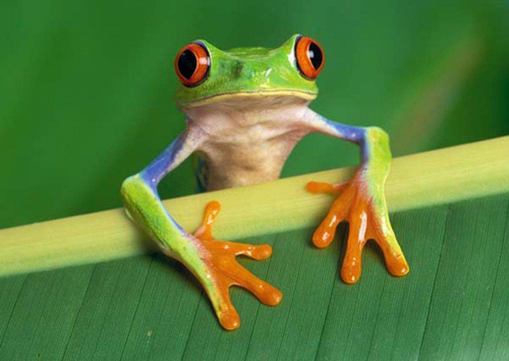 Ngủ mơ thấy ếch nhảy vào nhà