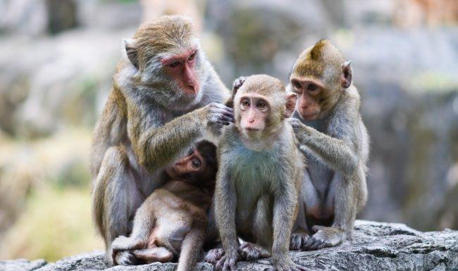 Giải mã ý nghĩa giấc mơ thấy khỉ