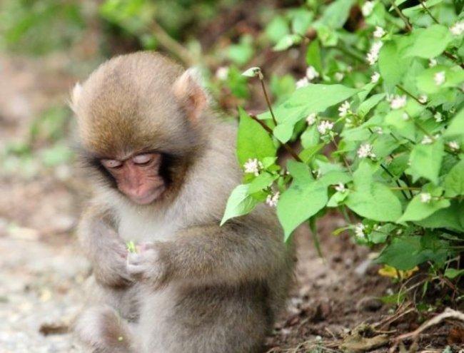 Giải mã giấc mơ khỉ mặc quần áo