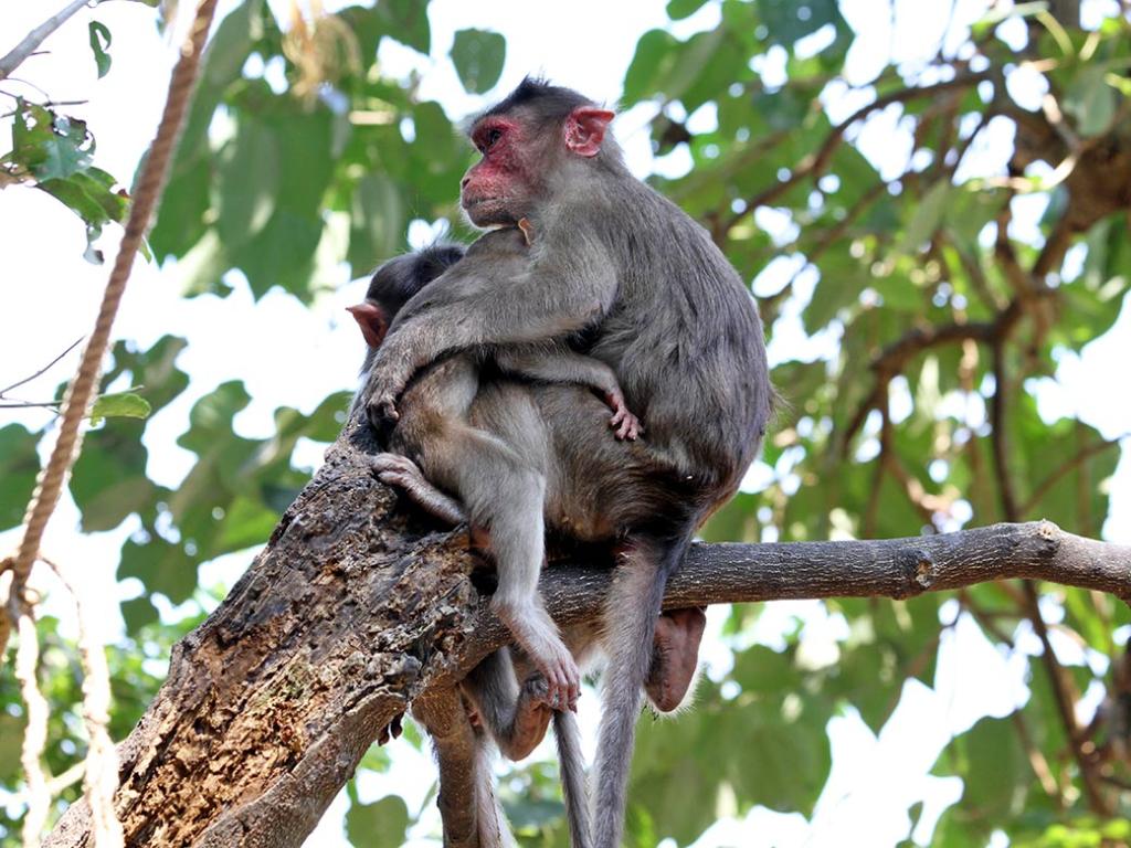 Ngủ mơ thấy khỉ leo cây lành hay dữ?