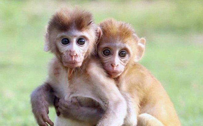 Mơ thấy khỉ nên đánh số nào?