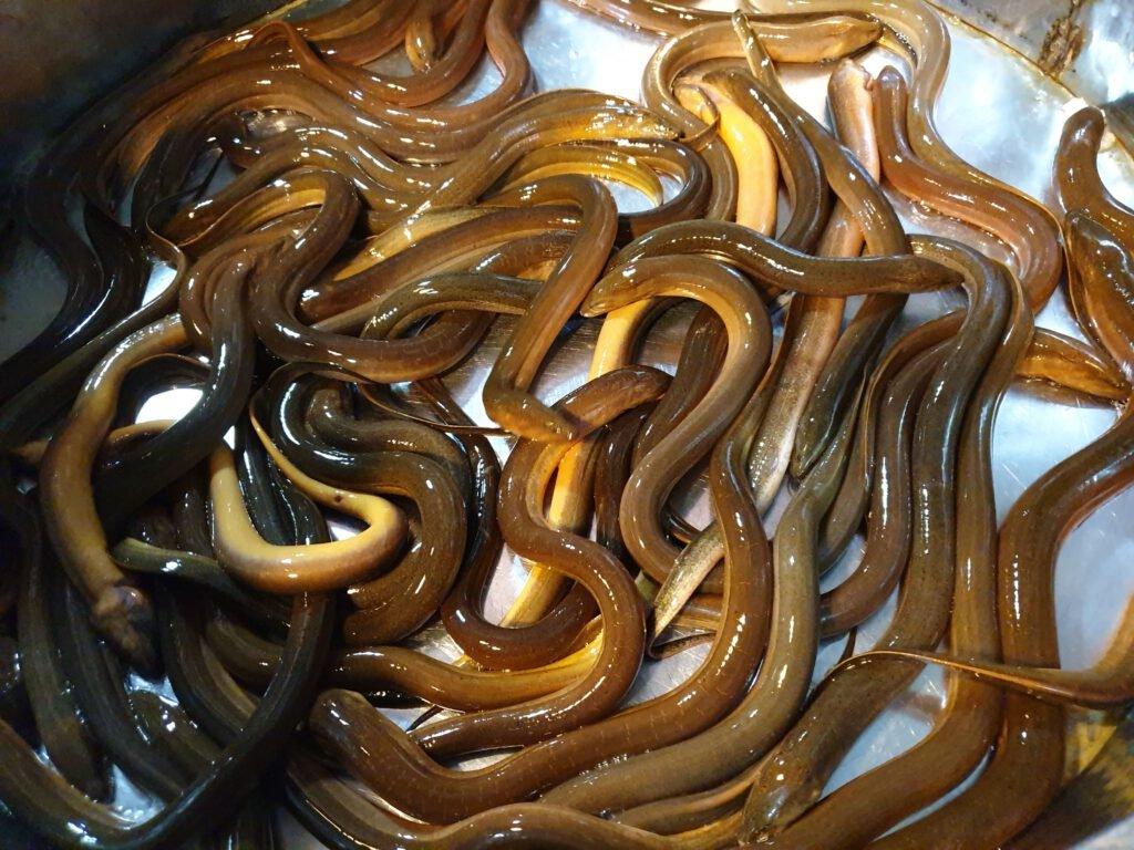 Mơ thấy lươn là điềm hung hay cát?