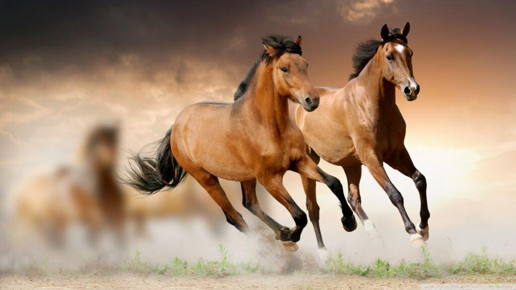 Mơ thấy ngựa là điềm báo gì?