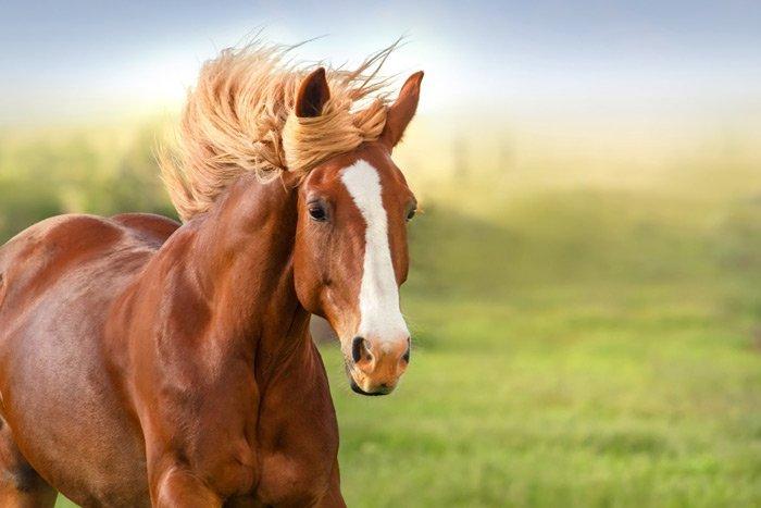 Nằm chiêm bao thấy ngựa vàng