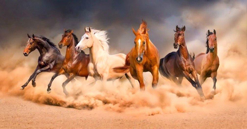 Ngủ mơ thấy ngựa đánh số nào?