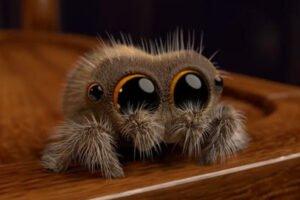 nằm mơ thấy nhện